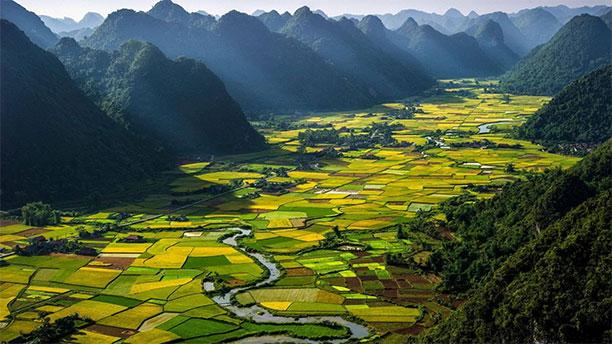 عکاسی از مزرعه های برنج