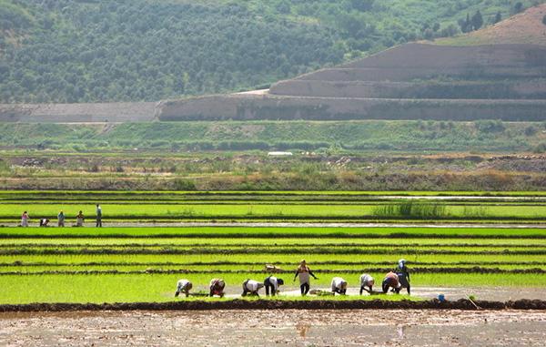 rice-fields-motamem11