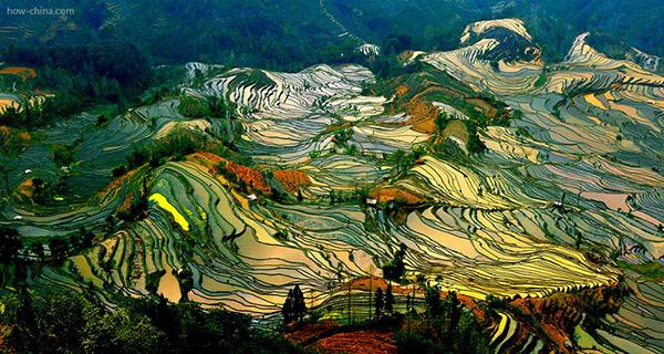 rice-fields-motamem145