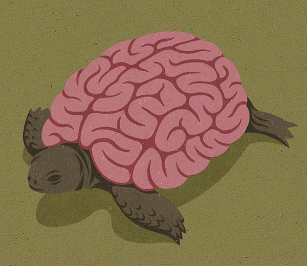 tortoise-motamem-org