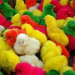 استعدادیابی – درس ۹: تشخیص و تفکیک رنگها