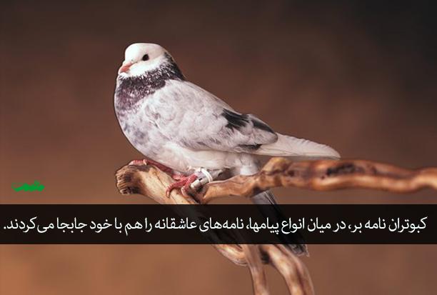 کبوتران نامه بر و تاریخچه تولید محتوا