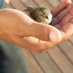 مهربانی های کوچک زندگی