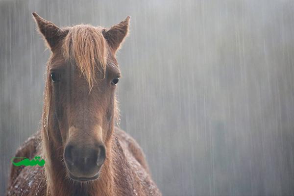 حیوانات در یک روز بارانی