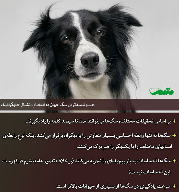 باهوش ترین سگ دنیا