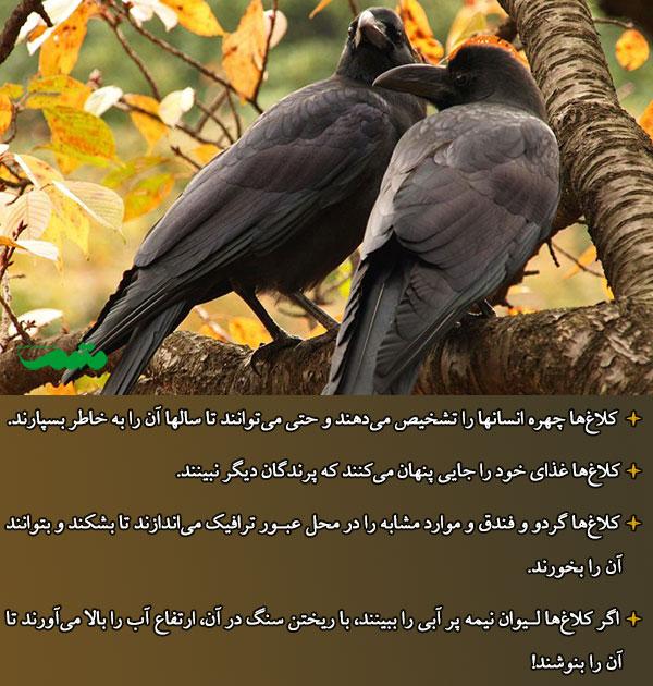باهوش ترین پرنده دنیا