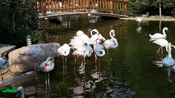 birds-garden-motamem-org7