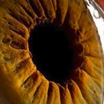 زبان بدن – درس 11: ارتباط چشمی و پیامهای چشمهای ما