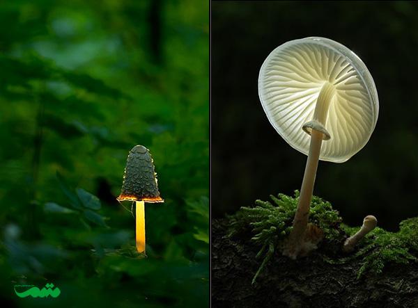 beautifull-mushroom-motamem-org00