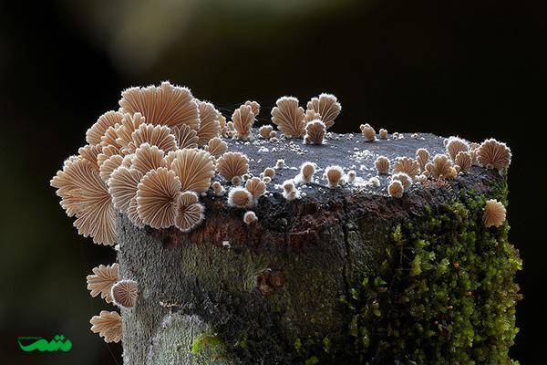 beautifull-mushroom-motamem-org16