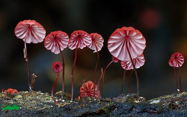 beautifull-mushroom-motamem-org17