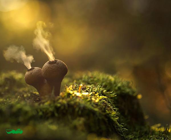 beautifull-mushroom-motamem-org18