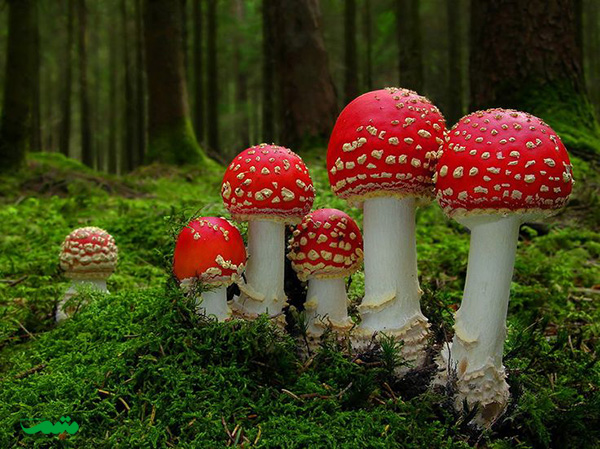 مجموعه ای از تصاویر قارچها | متمم