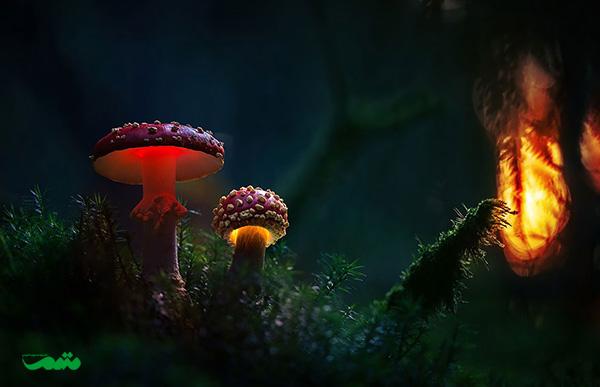 beautifull-mushroom-motamem-org31