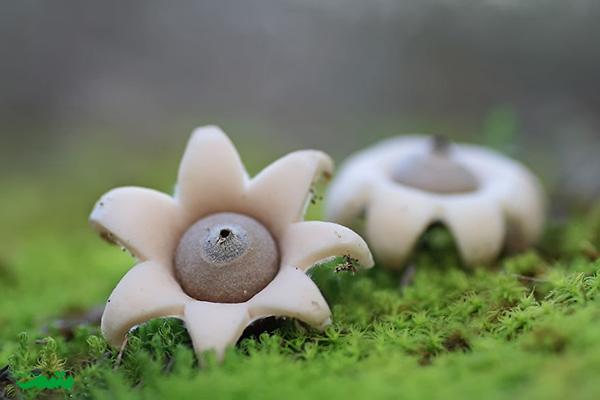 beautifull-mushroom-motamem-org5