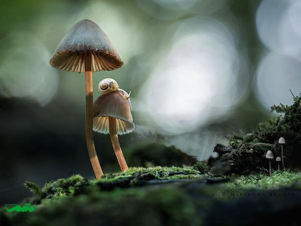 beautifull-mushroom-motamem-org6