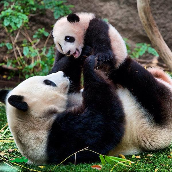 mom-animal-love-motamem-org