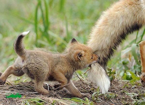 mom-baby-animal-motamem-org10