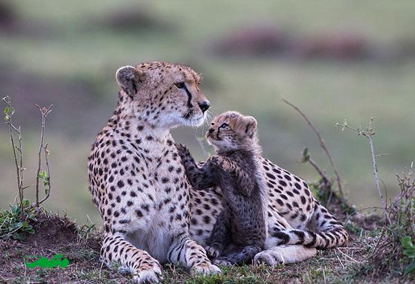 mom-baby-animal-motamem-org12