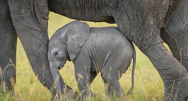 mom-baby-animal-motamem-org14