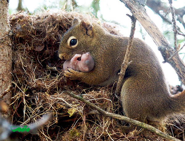 mom-baby-animal-motamem-org23