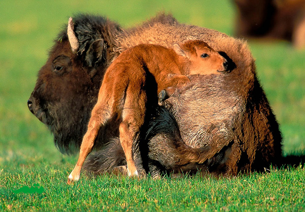 mom-baby-animal-motamem-org6