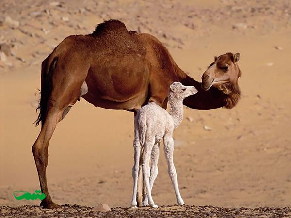 mom-baby-animal-motamem-org7