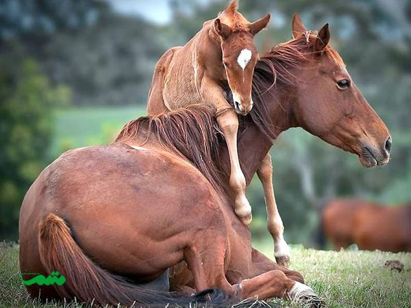 mom-baby-animal-motamem-org8