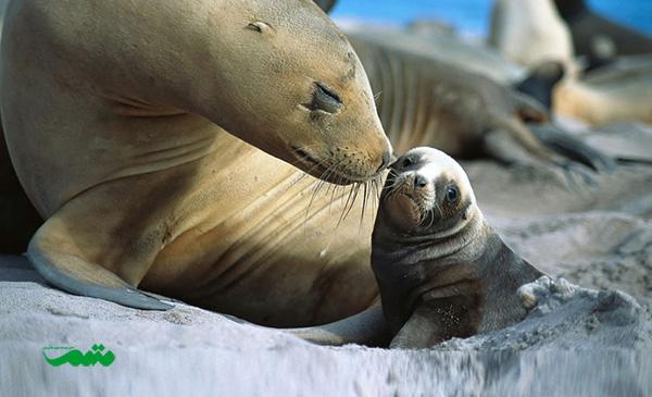mom-baby-animal-motamem-org9