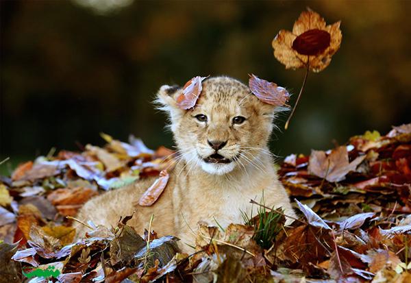 animal-in-fall-motamem-org3