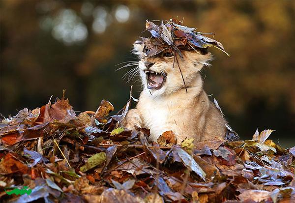 animal-in-fall-motamem-org4