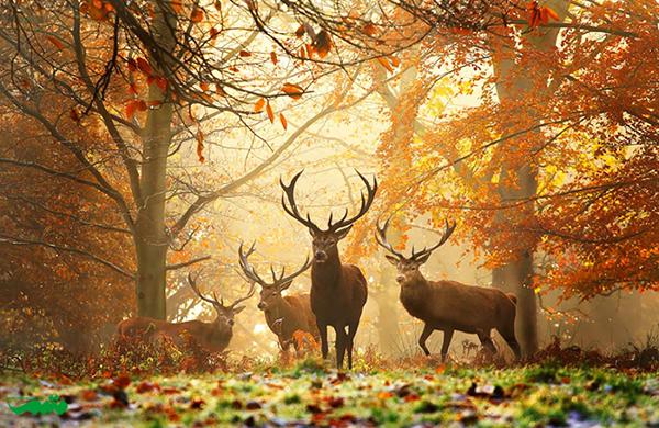 حیوانات در پاییز