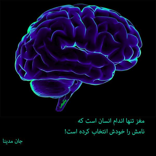 مغز و فرایند دوگانه در تصمیم گیری - از میان همهی مدلهایی که مغز تاکنون طراحی و انتخاب کرده، شاید جذابترین مورد، مدلهایی است که مغز برای کارکرد خود، طراحی کرده و حدس زده است