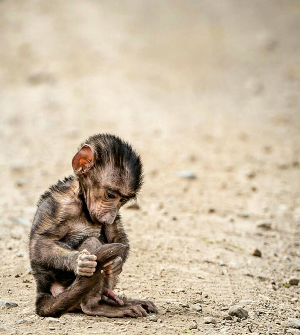 monkeycute-motamem39