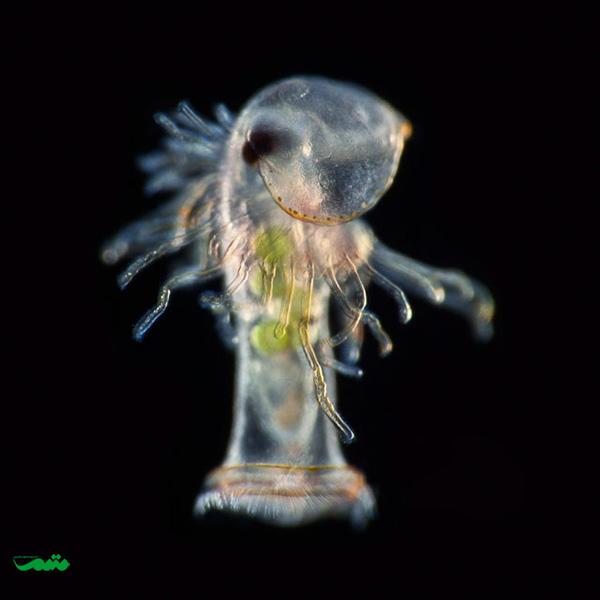 مقام نوزدهم: دکتر ریچارد کربی از انجمن زیستشناسی دریایی پلیموت، انگلستان موضوع: کرم نعل اسبی