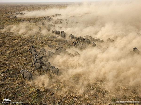 مهاجرت فیل ها در سودان جنوبی