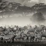 مجموعه تصاویر از مهاجرت دسته جمعی حیوانات