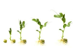 عوامل و موانع پرورش استعدادها