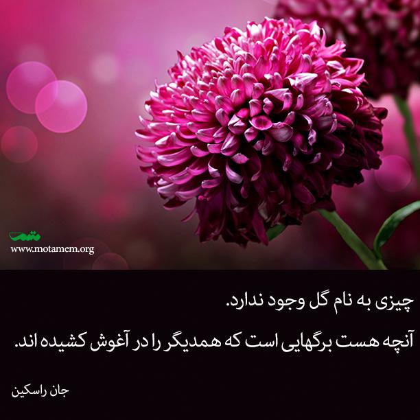 flower-motamem-org