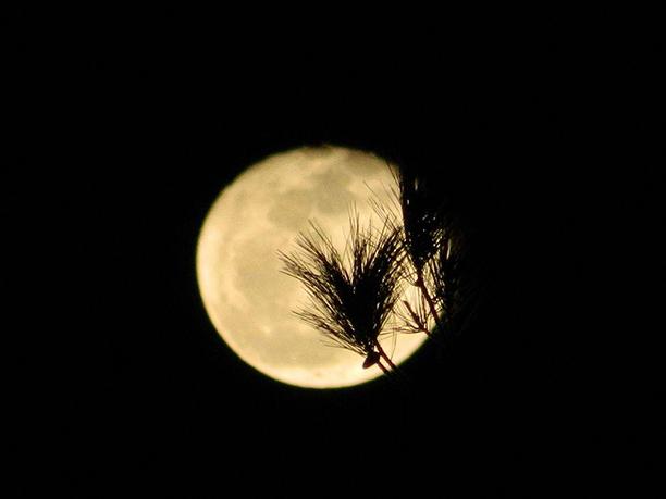 سیاهی در شب