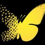 تعریف اثر پروانه ای چیست؟ مثالهای اثر پروانه ای (+محتوای تشویقی)