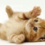 زبان بدن گربه ها (گرایش تخصصی زبان دُم!)