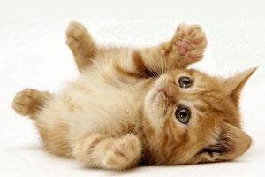 زبان بدن گربه ها