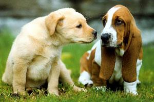 گفتگوی دو سگ - کتاب چهل و هشت قانون قدرت - رابرت گرین