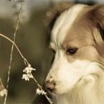 حیوانات هم از بهار سهم دارند (قسمت دوم مجموعه تصاویر)