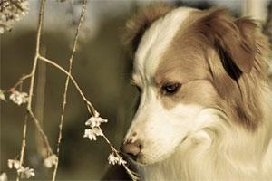 حیوانات از بهار سهم دارند