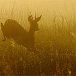 حیوانات هم از بهار سهم دارند (قسمت اول مجموعه تصاویر)