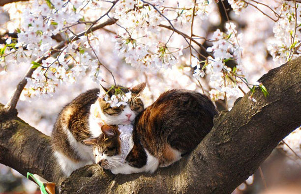 تصاویر حیوانات - بهار- گل - منظره