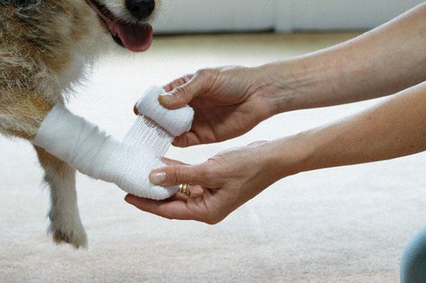 حیوانات در بیمارستان و کلینیک های تخصصی - سگ
