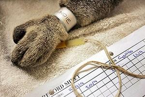 حیوانات در بیمارستان و کلینیک های تخصصی